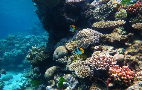 The Great Barrier Reef — Wonderful Wildlife