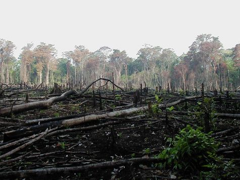 Pandemic or Not: Deforestation Is Still an Issue